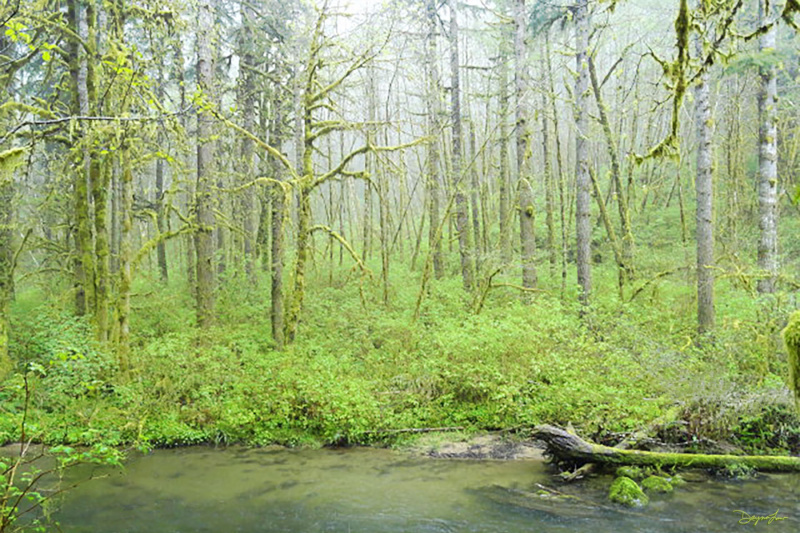 """""""River Trees"""""""