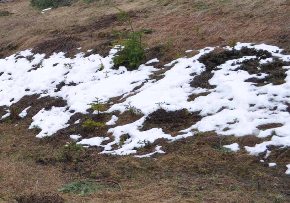You are currently viewing I had to see Snow