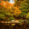 Ashland Lithia Park Japanese Garden