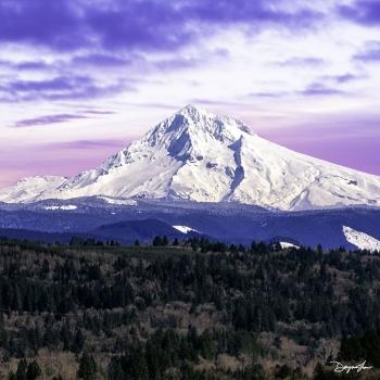 PT100 Majestic Mt. Hood