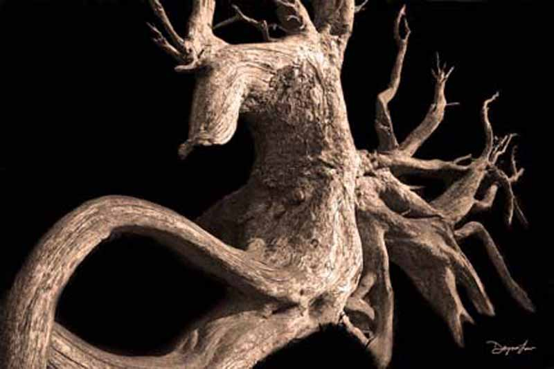 """""""Root of Time"""""""