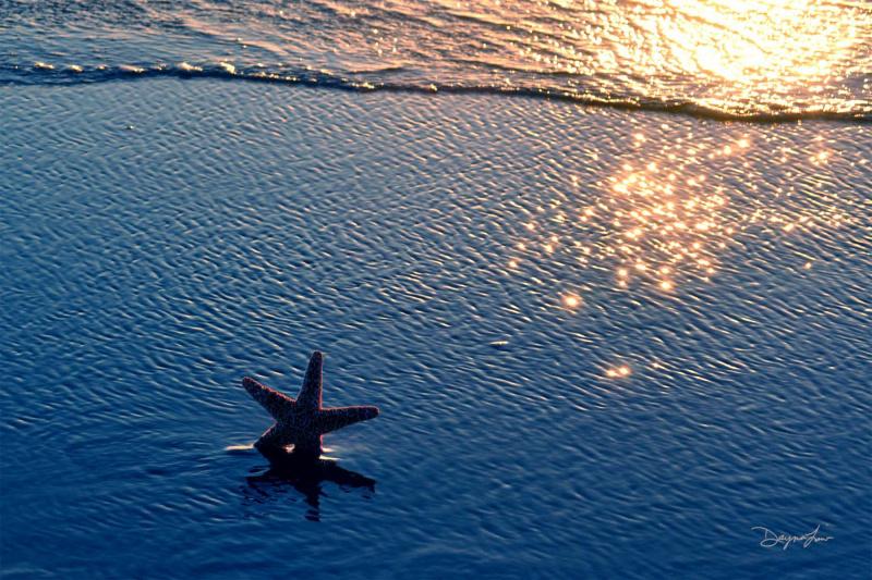 """""""Starfish Wishes"""""""