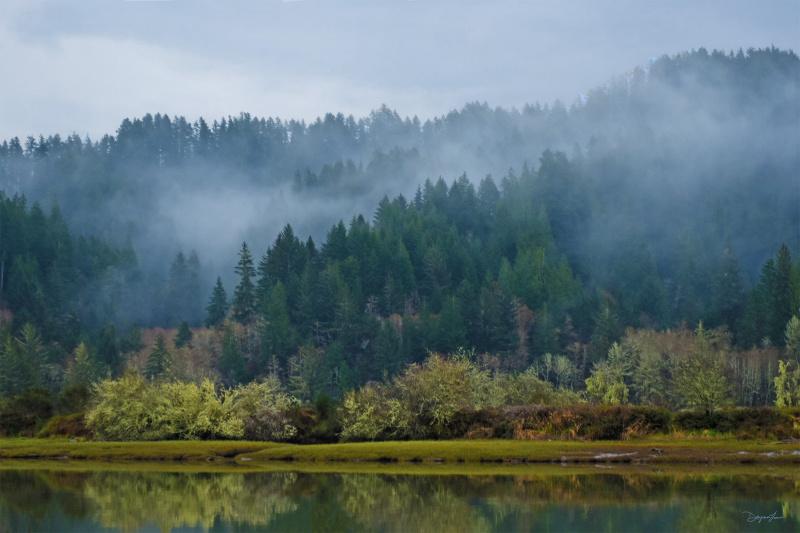 """""""Siuslaw River Fog"""""""