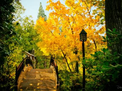 Bridge Ashland
