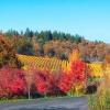 Left Coast Vineyards