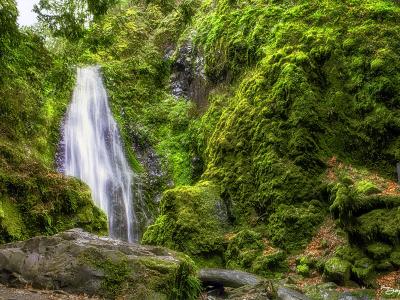 susan falls